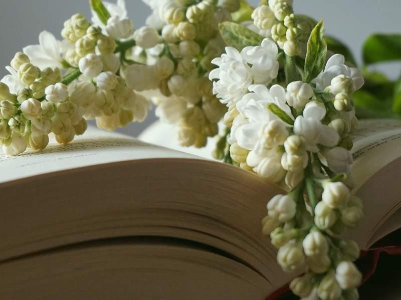 Imagen Sobran las palabras cuando hay paz - Teresa Marmol